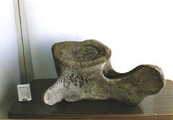 鯨の化石(くじらかせき)