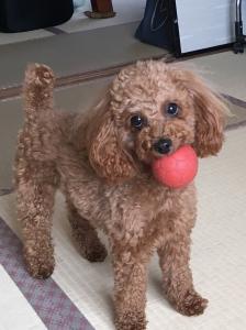 『愛犬「もも」』の画像