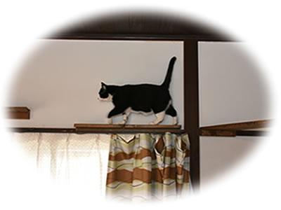 『石川さん宅の猫』の画像