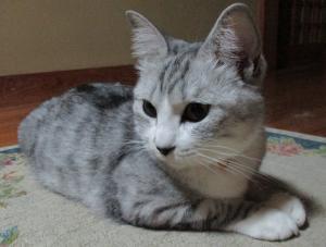 『お猫』の画像