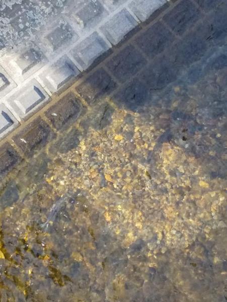 『鮭1』の画像