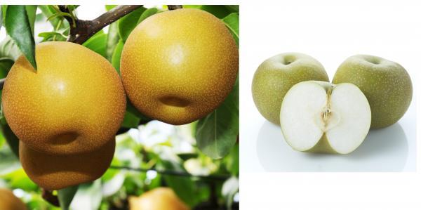 『特産品・農産物 梨』の画像