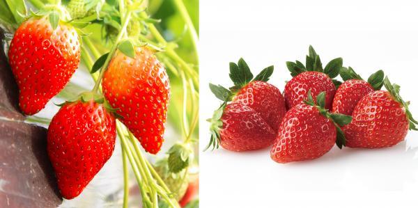 『特産品・農産物 イチゴ』の画像